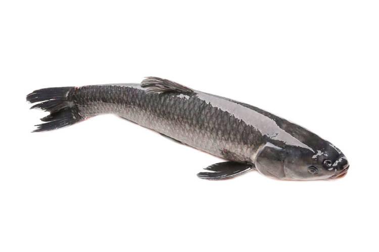 Bánh canh cá lóc bao nhiêu calo?