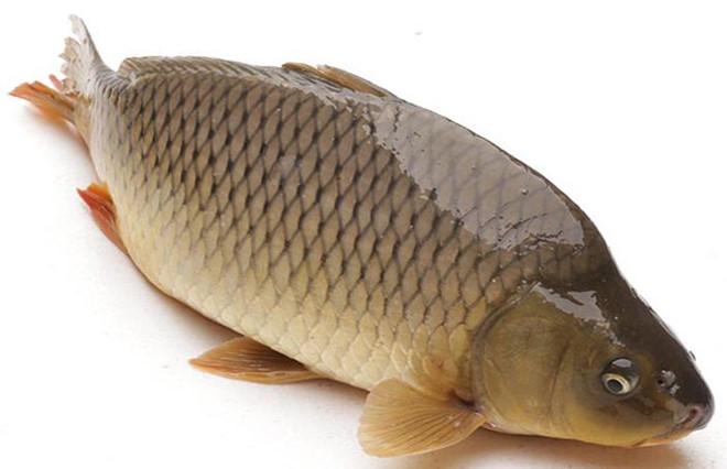 100g cá chép chứa bao nhiêu calo? Ăn nhiều cá chép có mập không?
