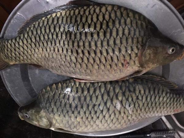 Cá trôi bao nhiêu calo? 5 cách chế biến món ăn từ cá trôi ngon khó cưỡng