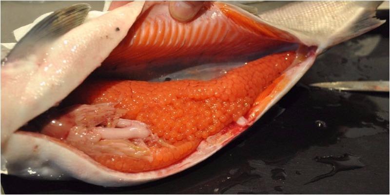 Hàm lượng calo trong trứng cá là bao nhiêu? Ăn trứng cá có tốt không?
